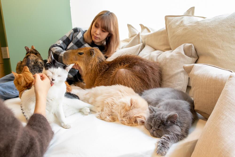 カピバラや猫と写真撮影している様子 by カピねこカフェ