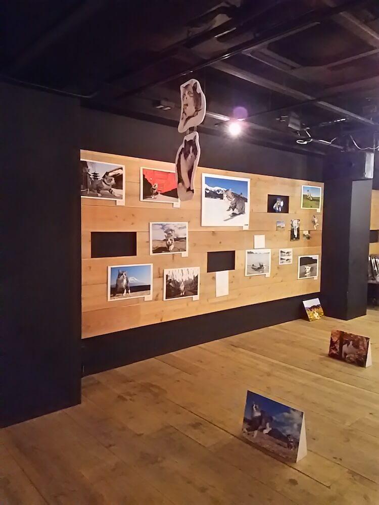 旅猫ニャン吉の写真展風景 in 両国門天ホール