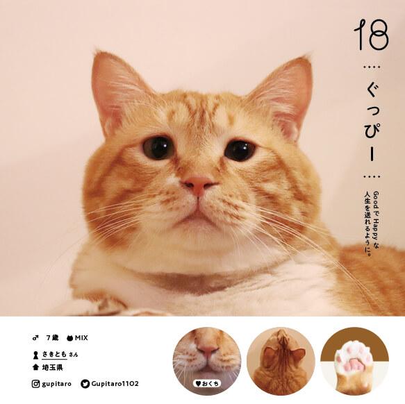 人気猫の「ぐっぴー」 by ねこさま名鑑100