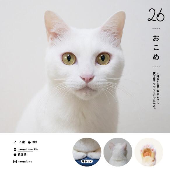 人気の白猫「おこめ」 by ねこさま名鑑100
