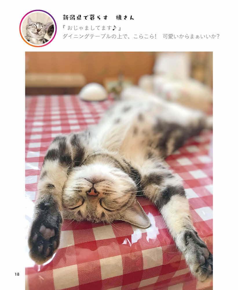 バンザイしたままへそ天で眠る猫 by 写真集「へそ天にゃんこ」