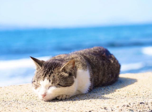 海辺でお昼寝する猫の写真 by 五十嵐健太