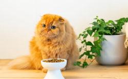 4種類の有害物質基準をクリア!猫の健康を追求したお洒落なフードボウルが登場