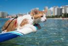 2月は猫の番組を毎日放送中!世界最大級の動物自然チャンネル「アニマルプラネット」が猫強化月間に突入