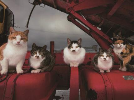 岩合さんが選んだ100枚の猫写真はこれだッ!写真コンテストの傑作集「ネコにカメラ」
