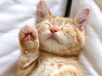 人気の旅にゃんこもやってくるよ!大丸東京店が全館を挙げて「だいまる猫まつり」を開催中