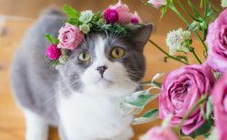 頭に花冠をのせた猫はこれほどまでに美しい…日比谷花壇の「猫の日」企画が可愛すぎる
