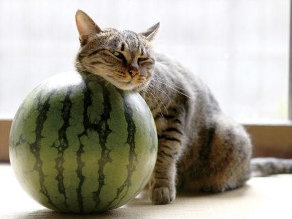 400点以上のネコ写真を展示!猫のことがもっと好きになるイベント「にゃんぱく」が大阪で開催