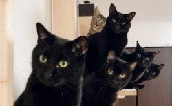 チラッと現れた猫の姿がたまらない…「ねこのひょっこり展」が開幕!ネコ写真家の作品も展示中