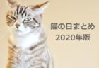 【2020年版】猫の日まとめ50選!注目のイベントやグッズなどを一挙公開(随時更新中)