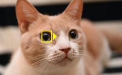 かわいい猫の瞳も逃さニャい!NikonのZシリーズが動物AF(オートフォーカス)機能を搭載