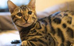 犬猫への感染や予防対策は?新型コロナウイルスのペット向けQ&Aを公開(随時更新)