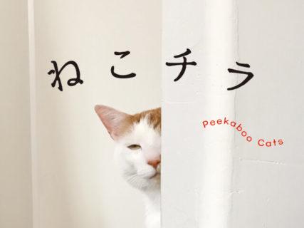 チラ見している猫は好きですか…?隠れきれていない姿が愛おしすぎる写真集「ねこチラ」