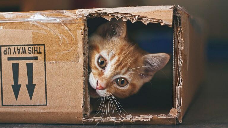 アニマルプラネットの猫の日企画「2月は、にゃんと!猫の月」特集
