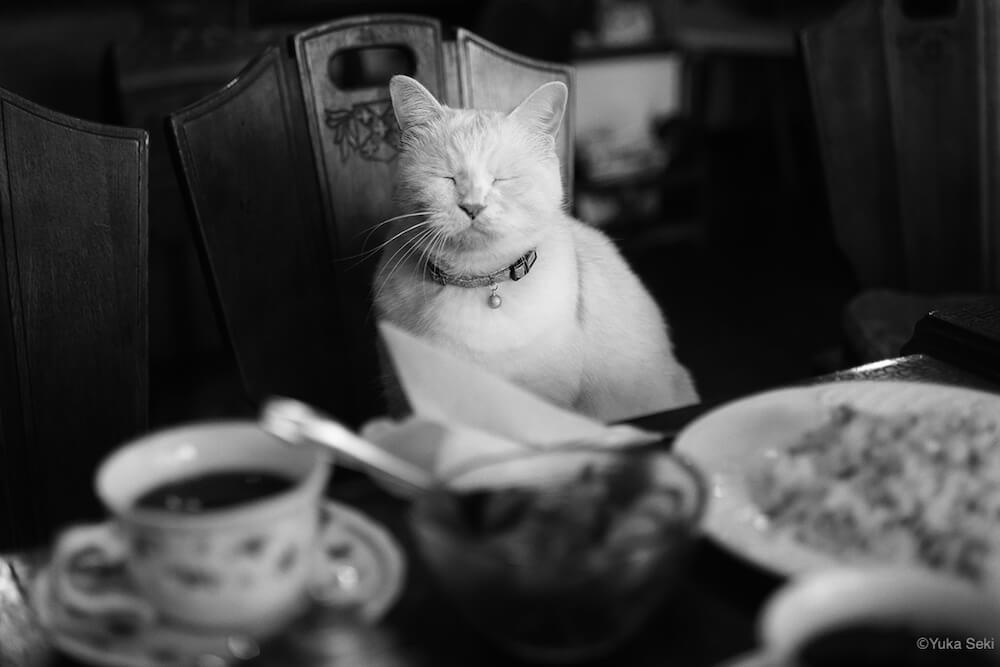 喫茶店の椅子に座って目を瞑る猫のモノクロ写真 by ねこ写真家・関由香