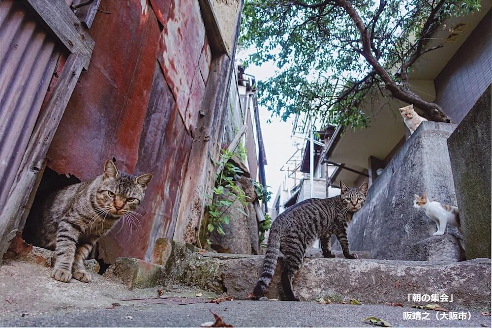 猫の集会に遭遇して猫に囲まれる写真 by 阪靖之(ネコにカメラ)