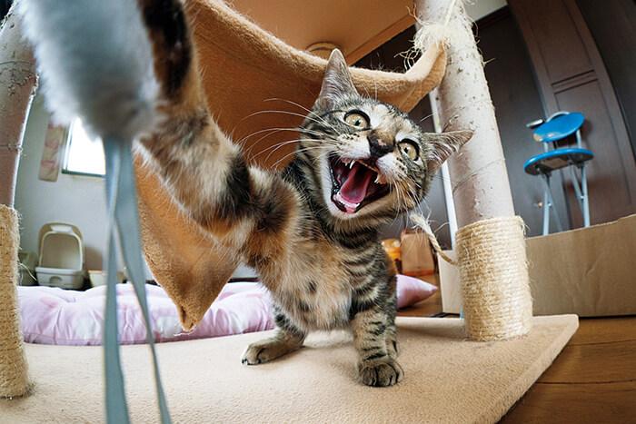 鬼のような形相で猫パンチを繰り出す猫 by 保護猫写真家・ねこたろう氏