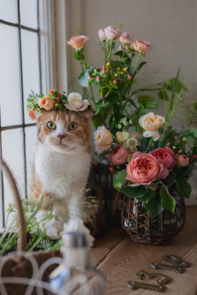 日比谷花壇の猫の日企画&キャンペーン
