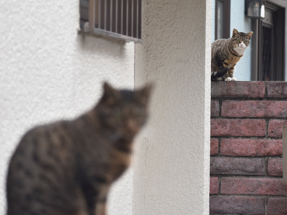 距離を取って警戒し合う2匹の猫のイメージ写真