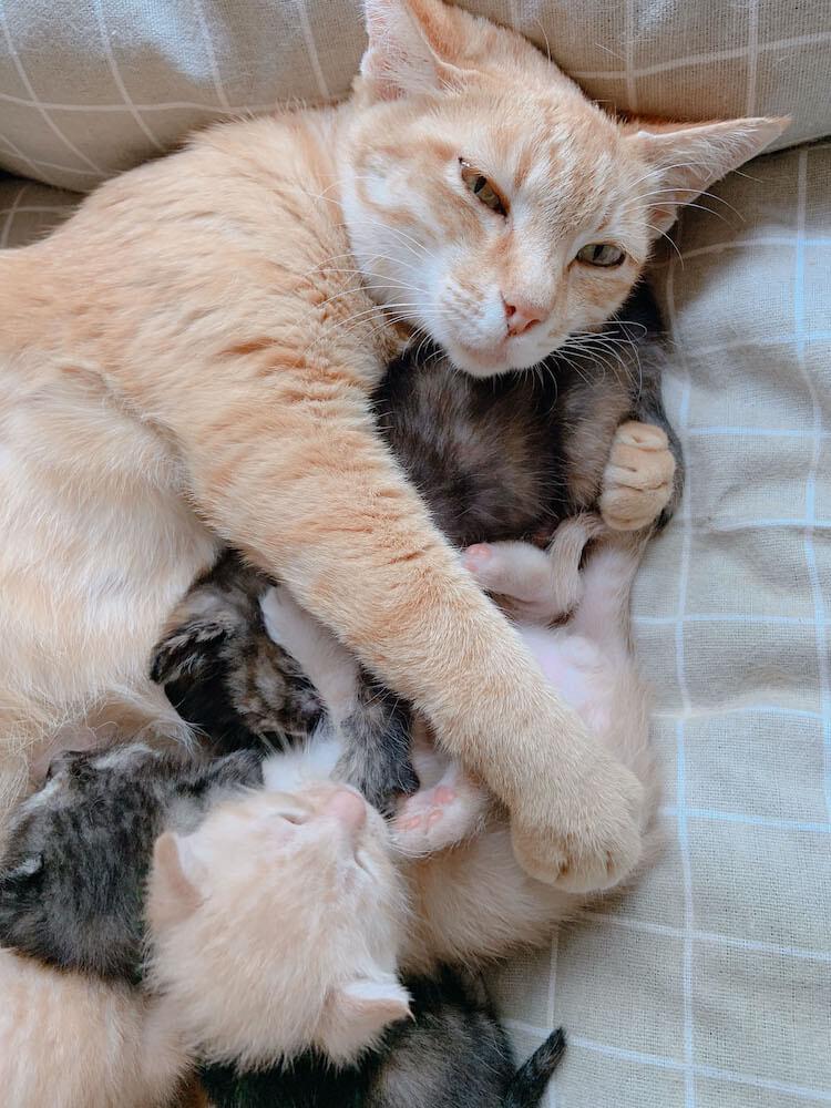 子猫を抱きかかえる母猫の写真(だいまる大賞受賞作品)