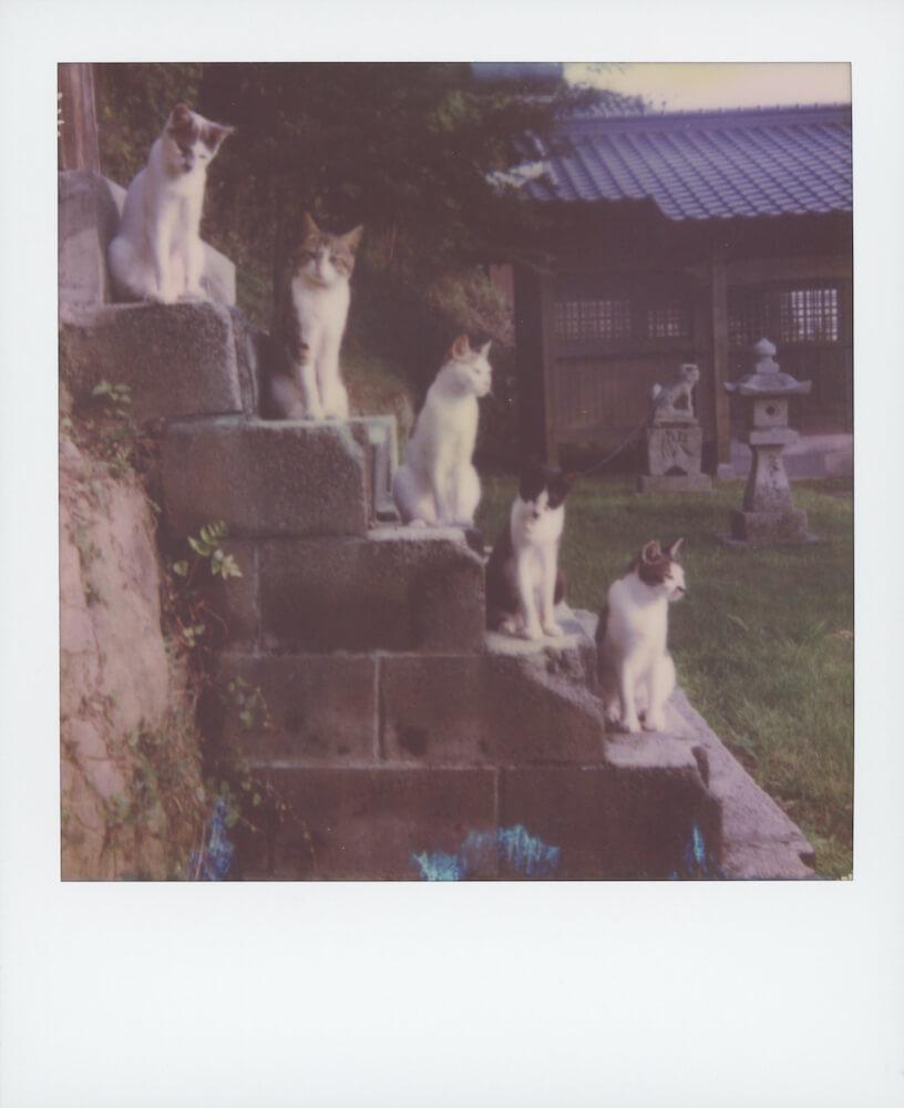 ポラロイドカメラで撮影した「石階段に1段ずつ座る猫」の写真 by 猫守よしお