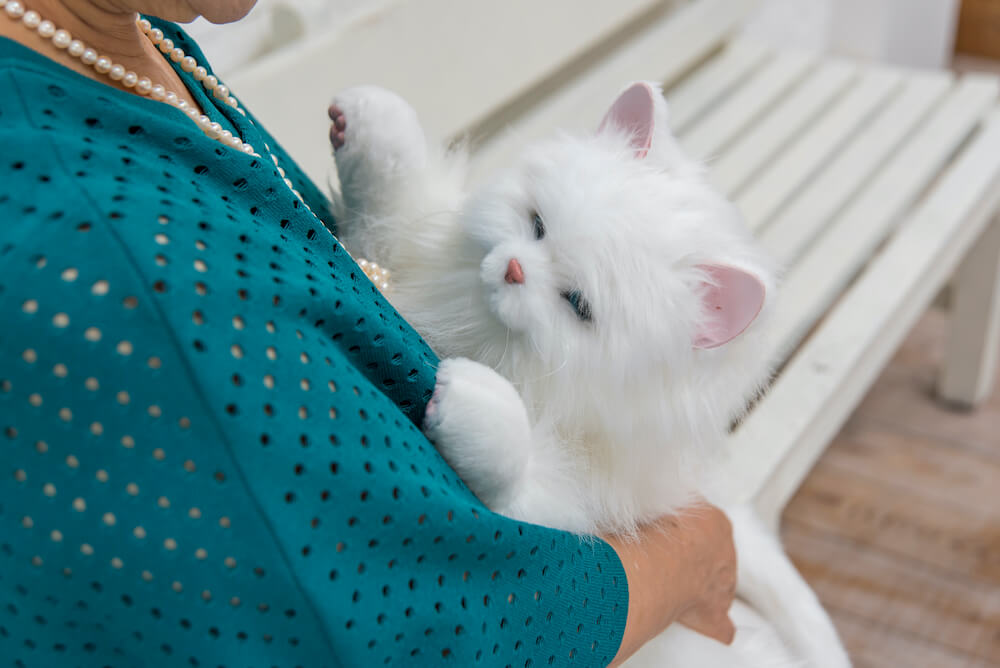 猫型ペットロボット「しっぽふりふり あまえんぼうねこちゃん」を抱っこした様子