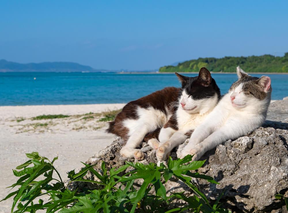 海辺で日向ぼっこする2匹の島猫 by simabossneko