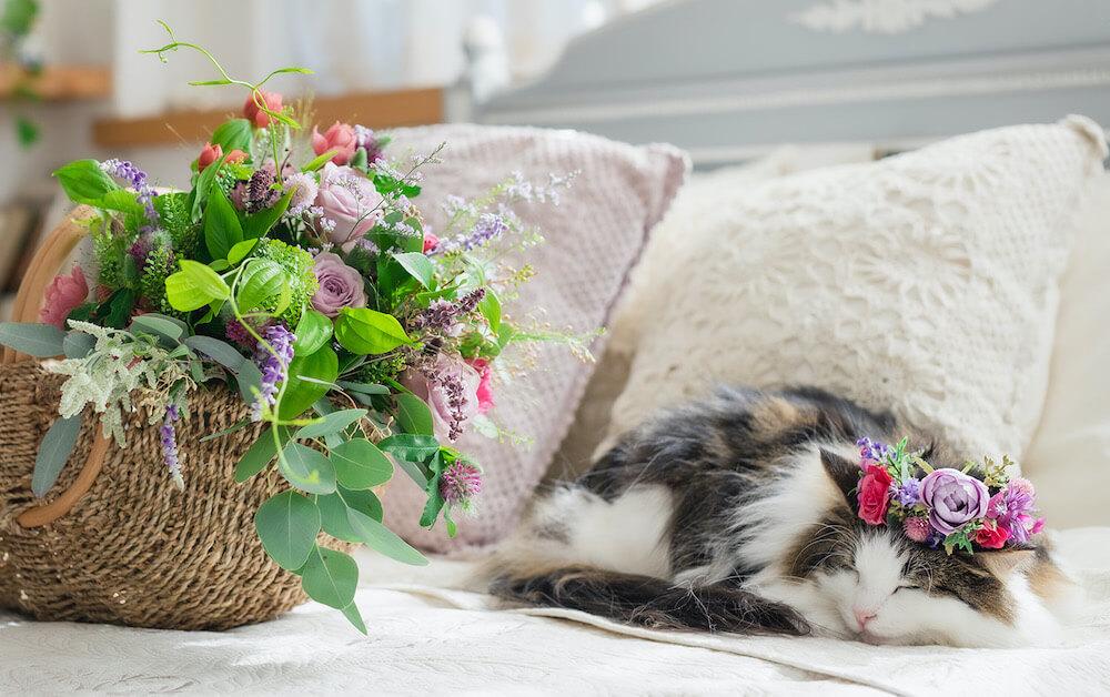 日比谷花壇の花冠を頭にのせた猫、ノルウェージャンフォレストキャットのベルちゃん