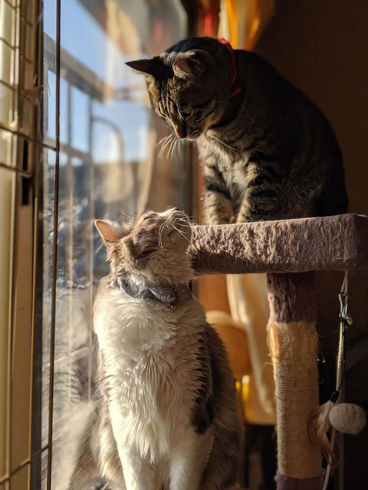 上下で見つめ合う2匹の猫の写真(だいまる副賞受賞作品)