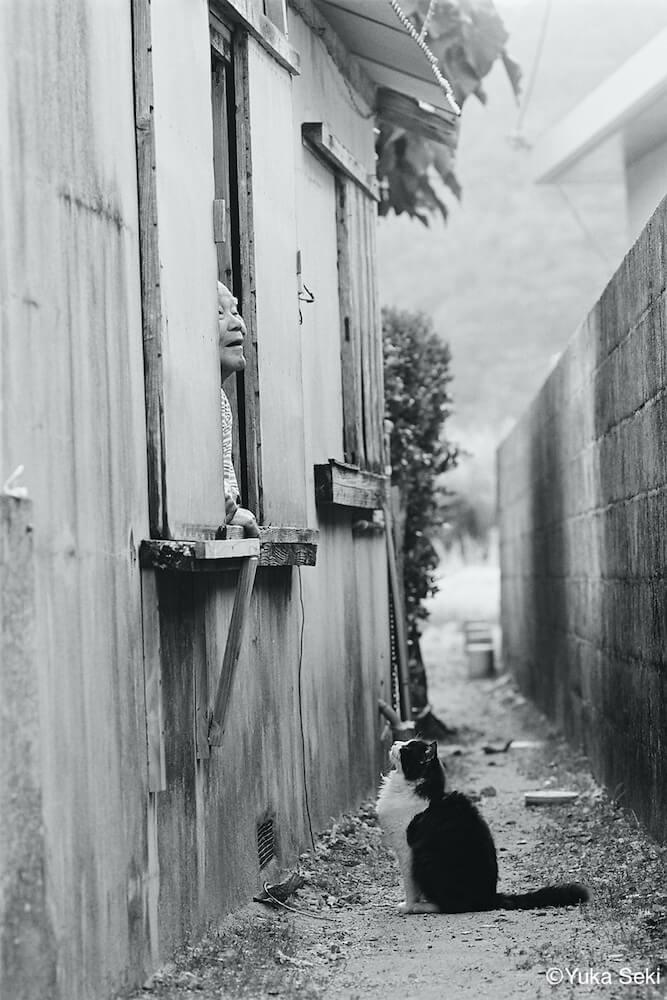 窓に立つ人間を下から見上げる猫のモノクロ写真 by ねこ写真家・関由香