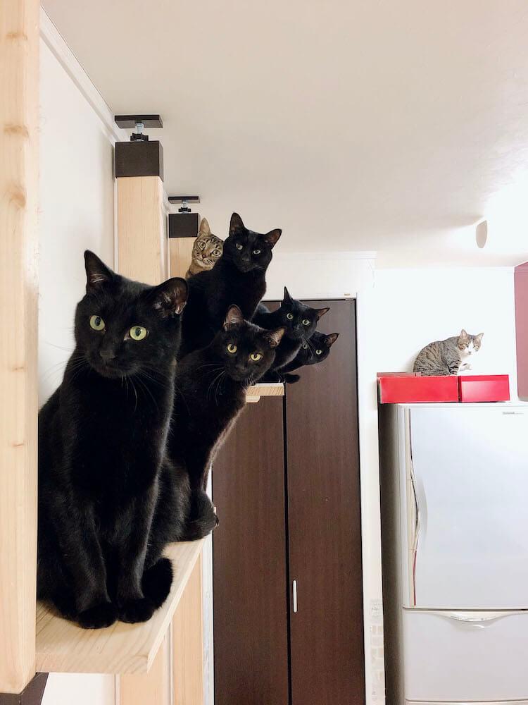 みんなでひょっこり顔を覗かせる猫たちの写真 by ねこのひょっこり展