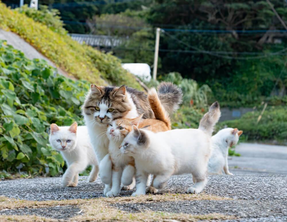 5匹で群れて歩く島猫の親子 by simabossneko