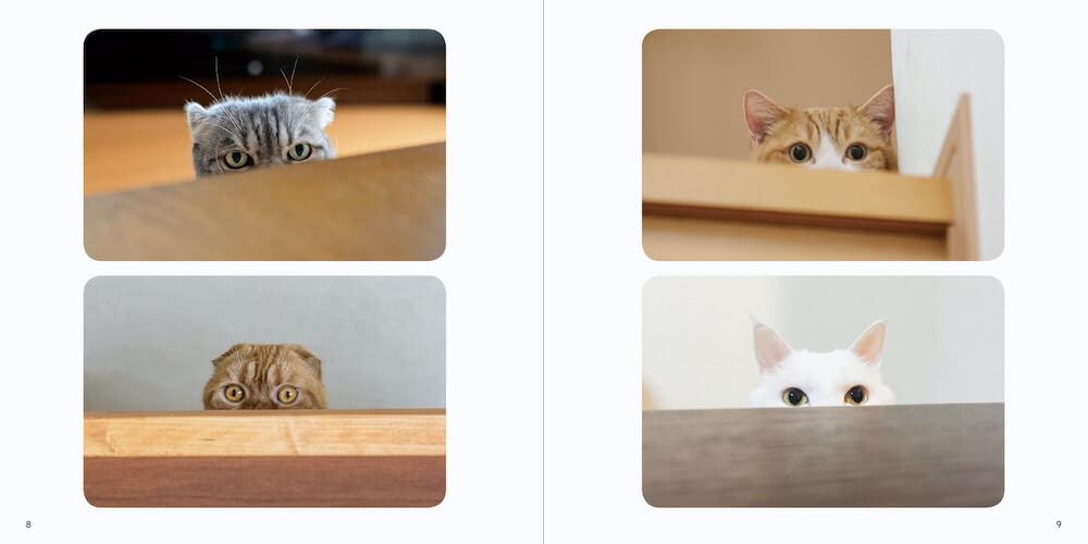 テーブルの下から様子をうかがう猫 by 写真集「ねこチラ」