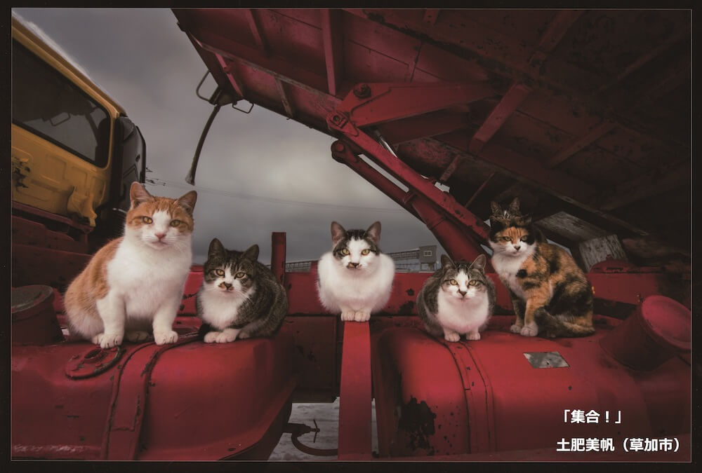 土居美咲さんが撮影した猫の集合写真 by ネコにカメラ