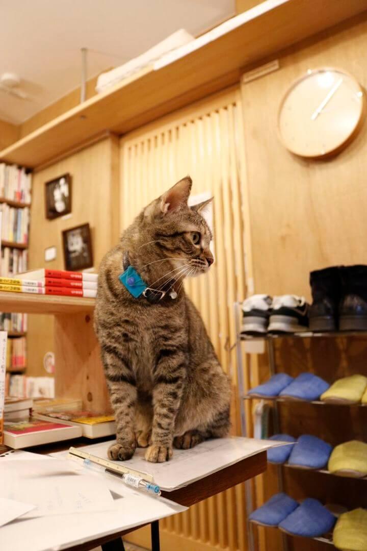 書店「Cat's Meow Books(キャッツ ミャウ ブックス)」の猫スタッフ「読太さん」