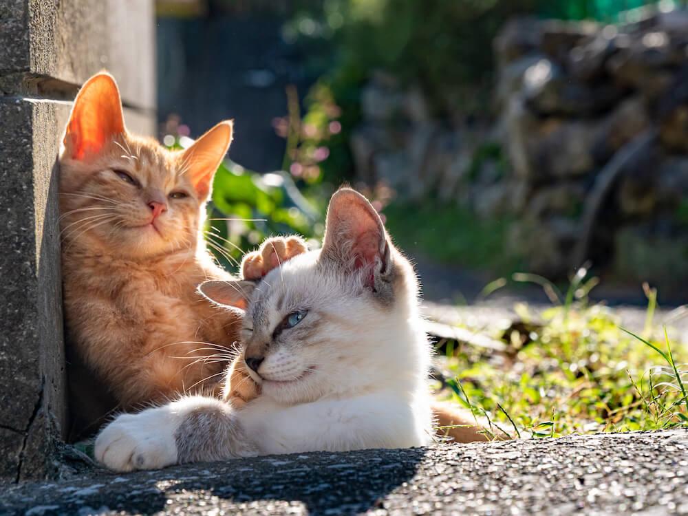 仲良く寝転ぶ2匹の島猫by simabossneko