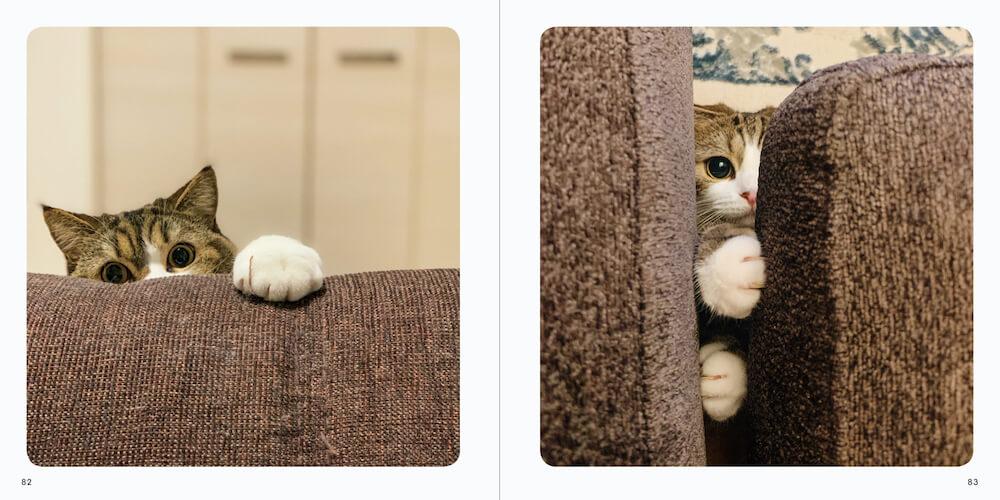 ソファーの隙間から覗く猫 by 写真集「ねこチラ」