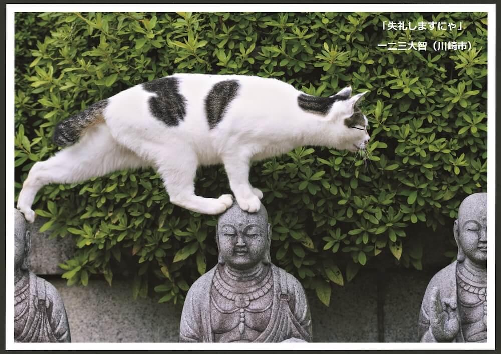 お地蔵様の頭の上を歩く猫の写真 by 一二三大智(ネコにカメラ)