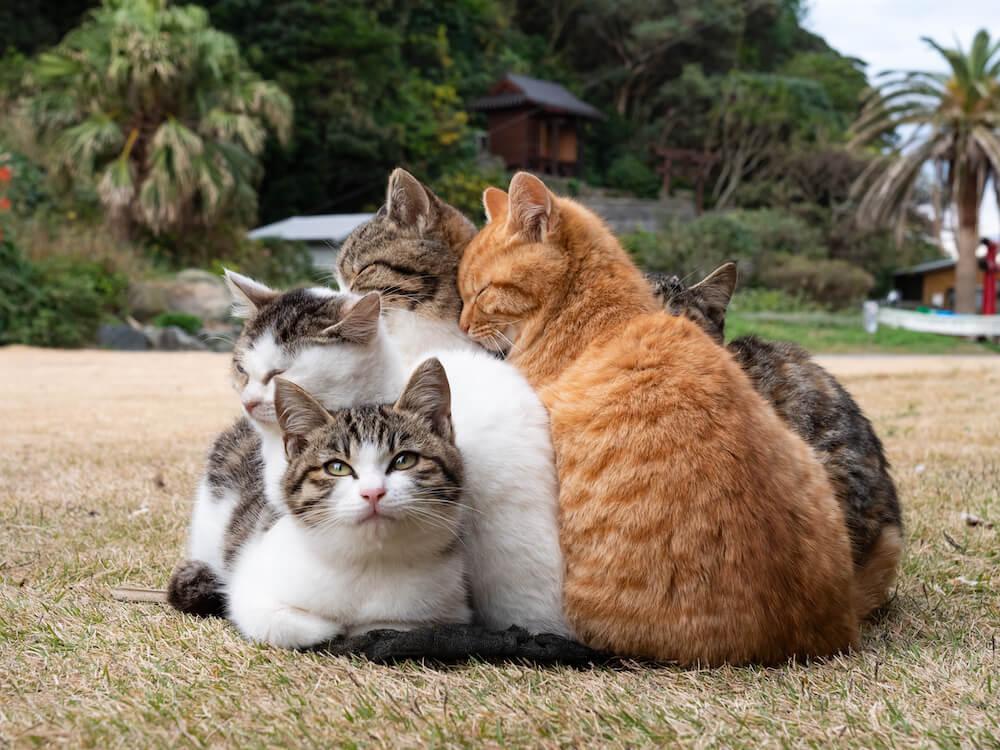 みんなで寄り添って暖を取る島猫 by simabossneko