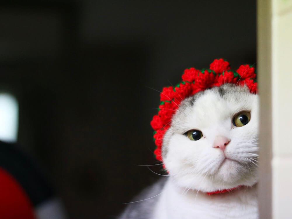 苺の帽子をかぶって顔を覗かせる猫の写真 by ねこのひょっこり展