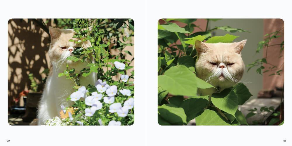 草木の陰から見つめる猫 by 写真集「ねこチラ」