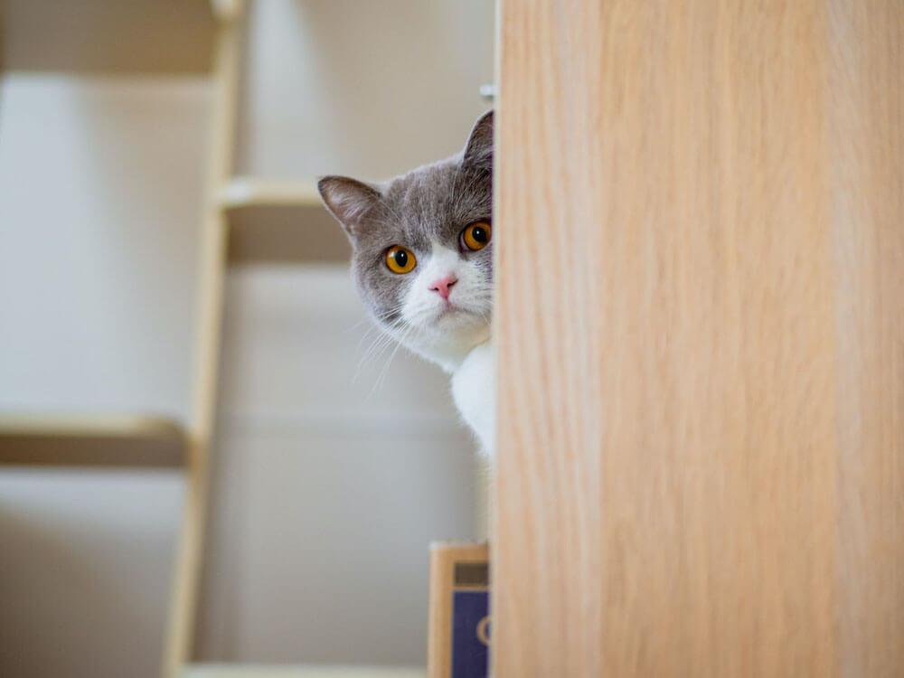 「家政婦は見た」の市原悦子のように顔を覗かせる猫の写真 by ねこのひょっこり展