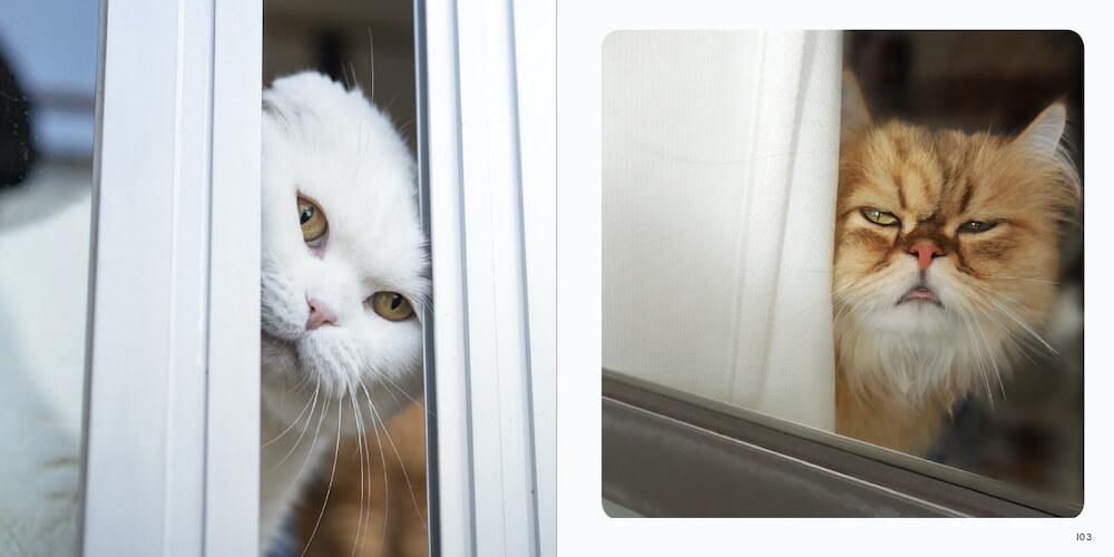 窓やカーテンの隙間からチラ見する猫by 写真集「ねこチラ」