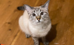 【猫の飼い主必見】ボール系猫のおもちゃランキング!ボール系は選ぶのが難しい...猫の動画ラムネチャンネル