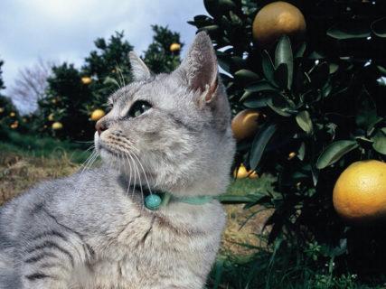岩合さんが愛媛を訪れて撮影した新作を多数展示!「いよねこ 猫と旅する写真展」愛媛県美術館で開催