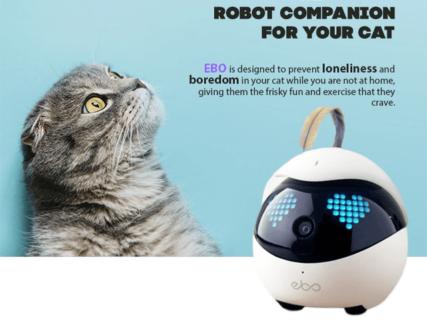 ルンバみたいに自動で帰還して充電!猫の遊び相手になってくれるロボット「Ebo(イーボ)」