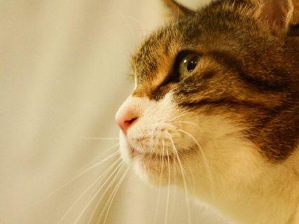 相次ぐ里親募集イベントの中止に対策、「ペットのおうち」がオンラインの譲渡会場を公開
