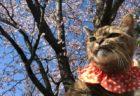 春の猫はひときわ美しい…会場が猫一色に染まるイベント「ねこ休み展」名古屋でスタート