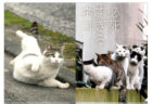「必死すぎるネコ」のTシャツやバッグが登場!沖昌之さんの大ヒットねこ写真集がグッズ化