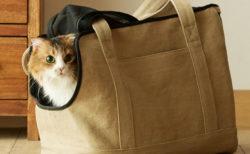 猫とお出かけするのが楽しくなりそうニャ〜♪ 軽くておしゃれな「ネコキャリーバッグ(Neko Carry Bag)」
